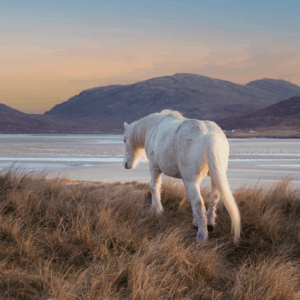 Outer Hebrides Equine Art Print